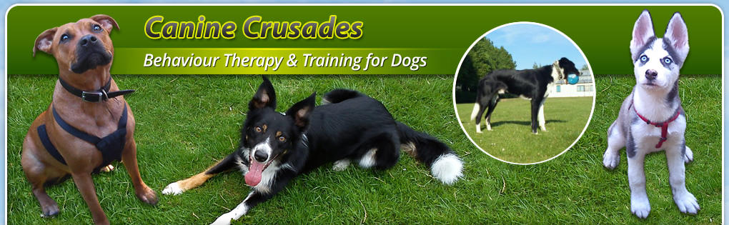 Behaviour Therapy & Training for Dogs